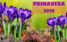 PRIMAVERA CONCELLO MESIA 2018
